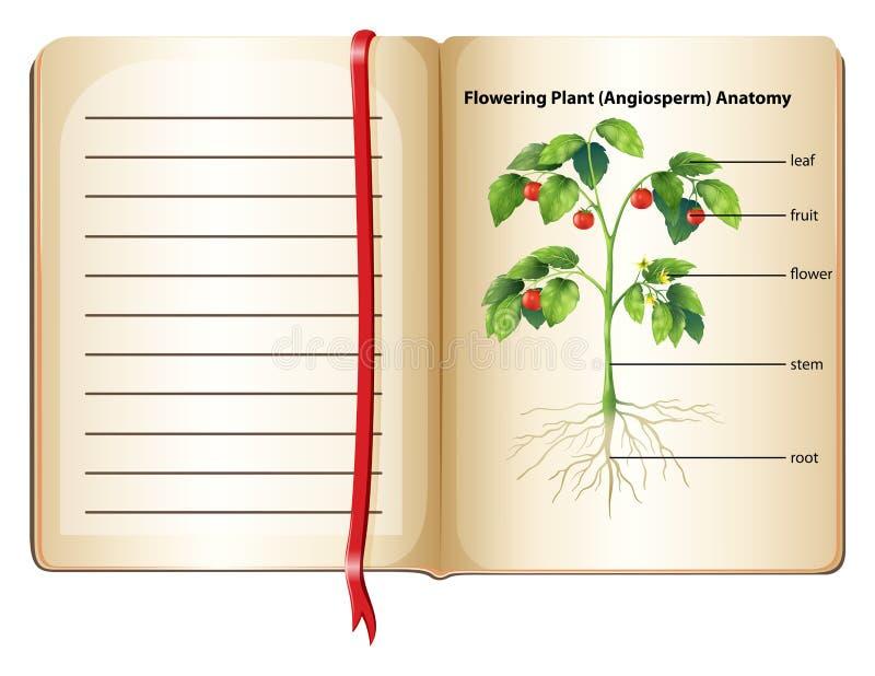 Anatomie Der Blühenden Pflanze Auf Seite Stock Abbildung ...