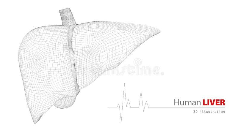 Anatomie der menschlichen Leber auf weißem Hintergrund stock abbildung