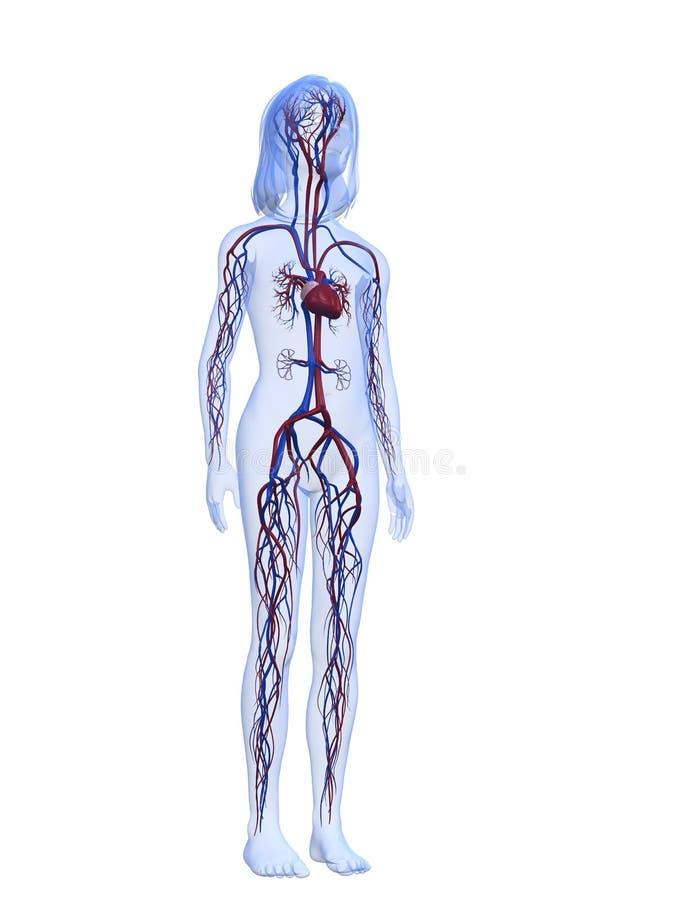 Beste Anatomie Des Gallensystems Bilder - Anatomie Ideen - finotti.info