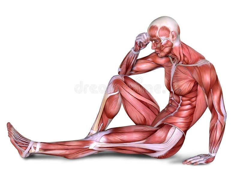 Anatomie Des Männlichen Körpers 3d Stock Abbildung - Illustration ...