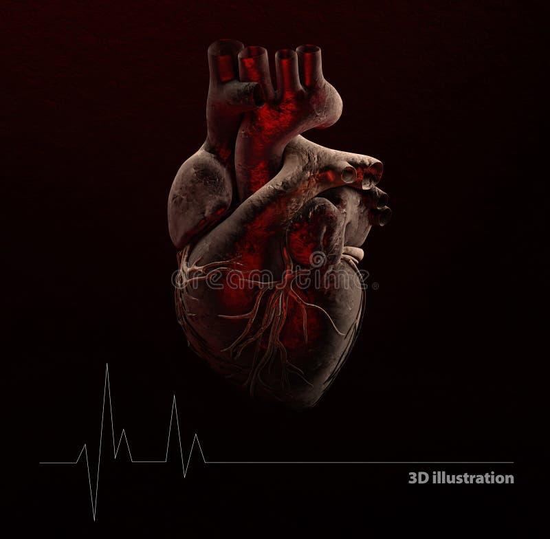 Anatomie des menschlichen Herzens lizenzfreie abbildung