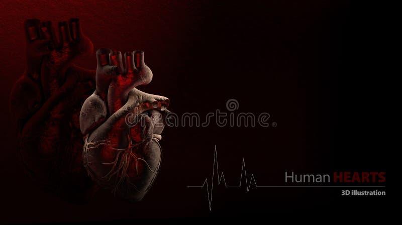 Anatomie des menschlichen Herzens stock abbildung