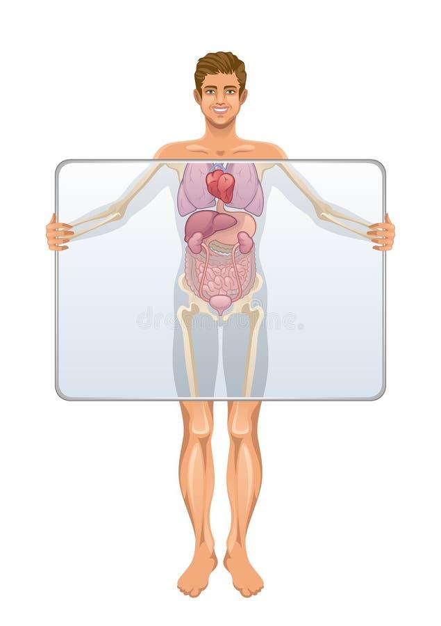 Anatomie des menschlichen Körpers stock abbildung