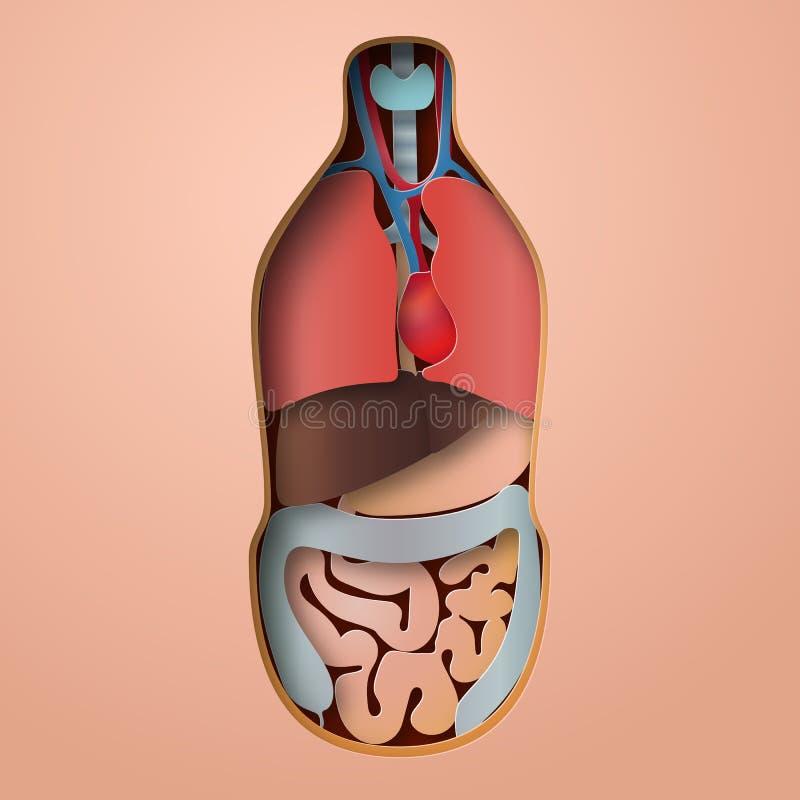 Anatomie Des Menschlichen Körpers, Medizinische Organsystem ...