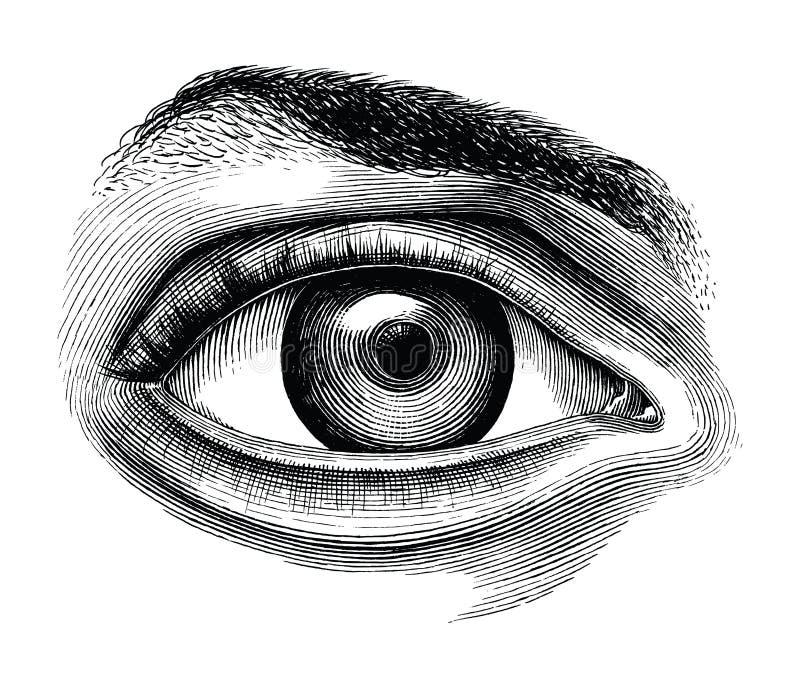 Anatomie du clipart (images graphiques) de vintage d'aspiration de main d'oeil humain d'isolement sur le petit morceau illustration de vecteur
