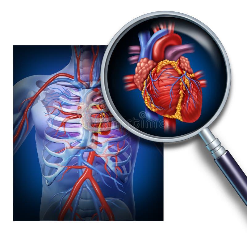 Anatomie du coeur humain illustration de vecteur
