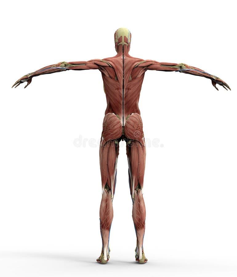 Fein Grundkörper Anatomie Bilder - Anatomie Ideen - finotti.info