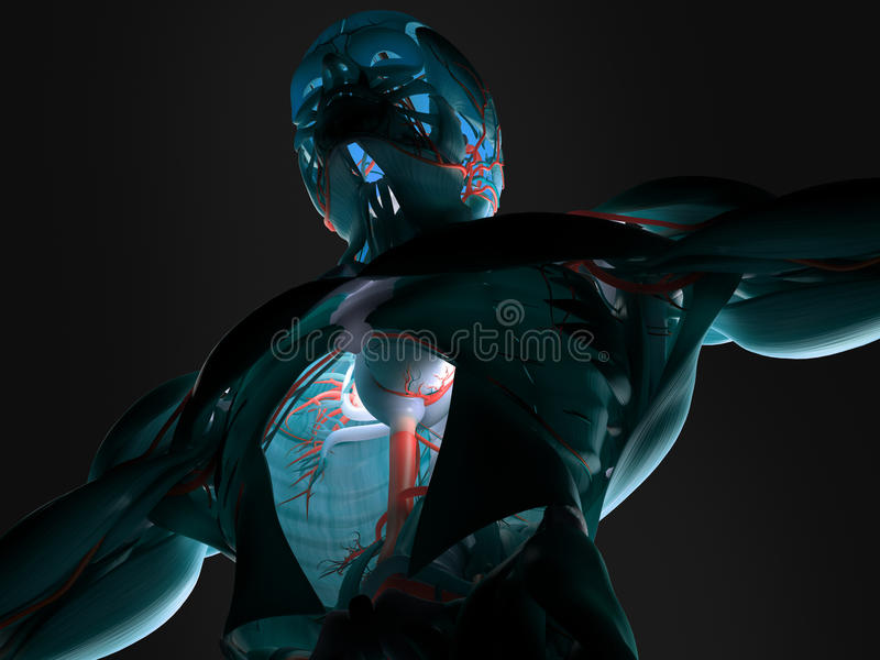 Anatomie humaine à l'avenir photos stock