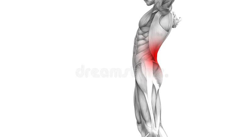 Anatomie humaine arrière avec douleurs articulaires articulaires d'inflammation d'un rouge ardent de tache illustration stock