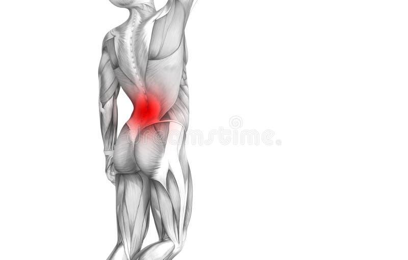 Anatomie humaine arrière avec douleurs articulaires articulaires d'inflammation d'un rouge ardent de tache illustration de vecteur