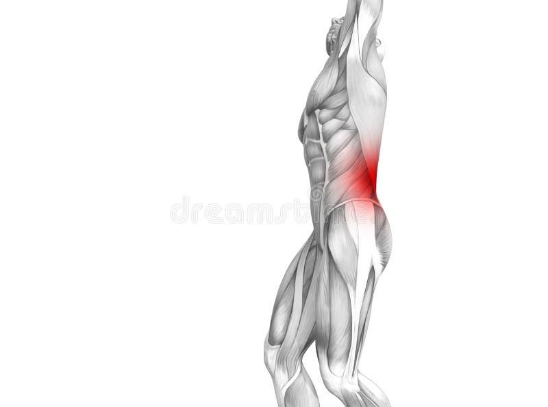 Anatomie humaine arrière avec douleurs articulaires articulaires d'inflammation d'un rouge ardent de tache illustration libre de droits