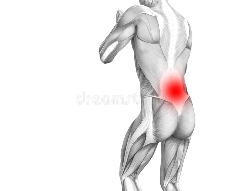 Anatomie humaine arrière avec l'inflammation d'un rouge ardent de tache illustration libre de droits