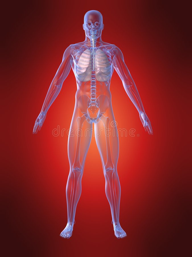 Anatomie humaine avec le poumon illustration libre de droits