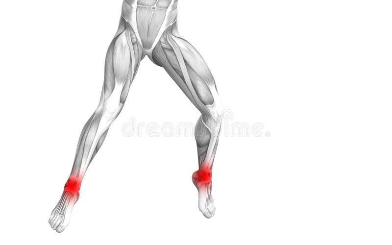 Anatomie humaine de cheville avec l'inflammation d'un rouge ardent de tache illustration libre de droits
