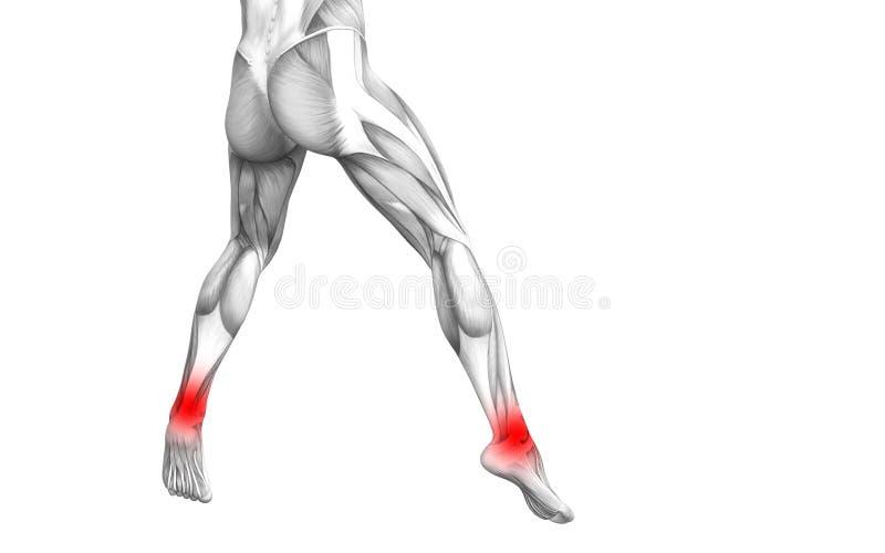 Anatomie humaine de cheville avec l'inflammation d'un rouge ardent de tache illustration stock