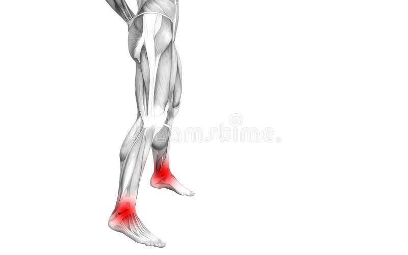 Anatomie humaine de cheville avec l'inflammation d'un rouge ardent de tache ou douleurs articulaires articulaires illustration de vecteur