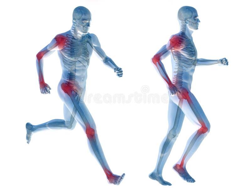 anatomie humaine de douleur de l'homme 3D d'isolement images stock