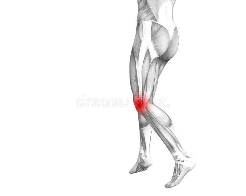 Anatomie humaine de genou avec l'inflammation d'un rouge ardent de tache illustration de vecteur