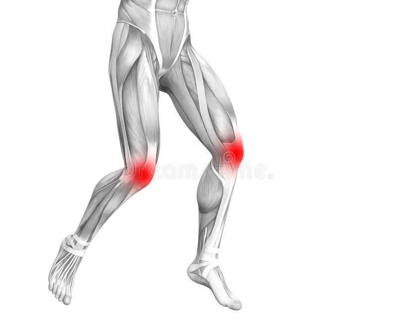 Anatomie humaine de genou avec l'inflammation d'un rouge ardent de tache illustration libre de droits
