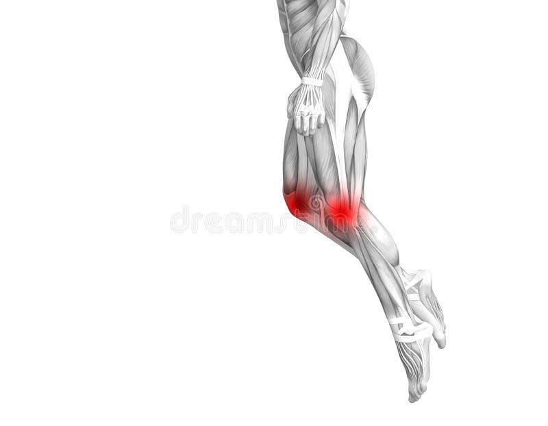 Anatomie humaine de genou avec l'inflammation d'un rouge ardent de tache illustration stock