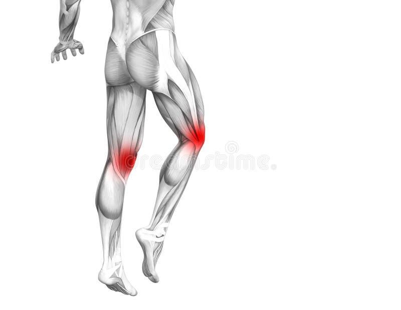 Anatomie humaine de genou avec l'inflammation d'un rouge ardent de tache ou douleurs articulaires articulaires illustration stock