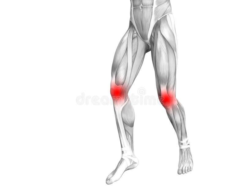 Anatomie humaine de genou avec l'inflammation d'un rouge ardent de tache ou douleurs articulaires articulaires illustration libre de droits