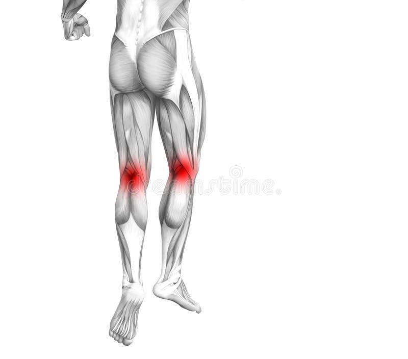 Anatomie humaine de genou avec l'inflammation d'un rouge ardent de tache ou douleurs articulaires articulaires pour la jambe illustration stock