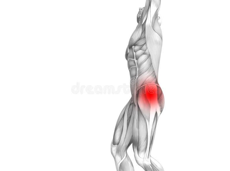 Anatomie humaine de hanche avec douleurs articulaires articulaires d'inflammation d'un rouge ardent de tache illustration stock