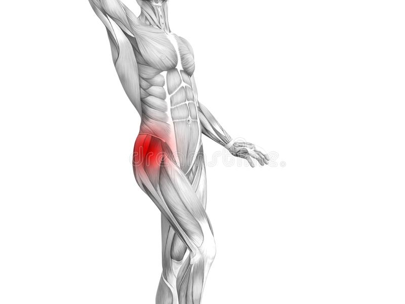 Anatomie humaine de hanche avec douleurs articulaires articulaires d'inflammation d'un rouge ardent de tache illustration de vecteur
