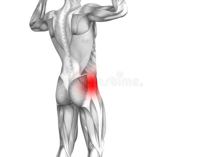 Anatomie humaine de hanche avec douleurs articulaires d'un rouge ardent d'inflammation de tache illustration de vecteur