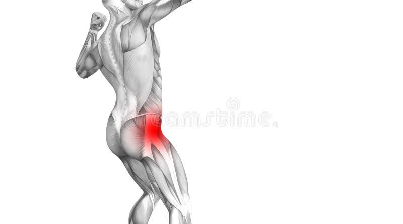 Anatomie humaine de hanche avec l'inflammation d'un rouge ardent de tache illustration de vecteur