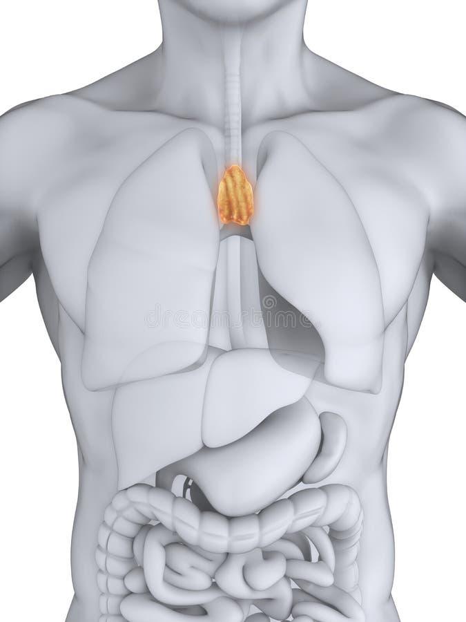 Großartig Truthahn Anatomie Bilder Ideen - Anatomie Ideen - finotti.info