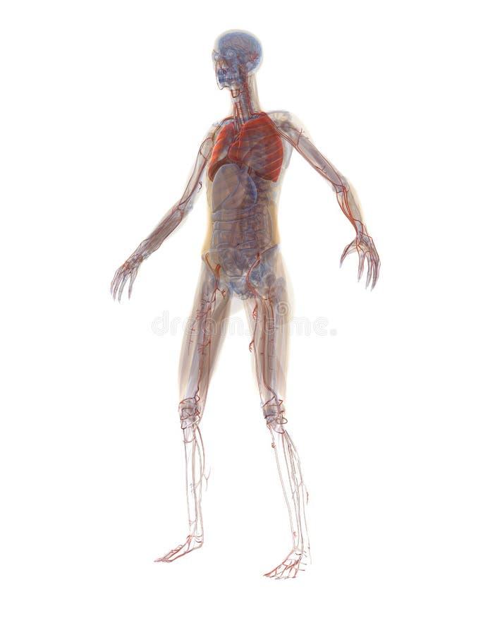 Fein Anatomie Und Physiologie Zellstruktur Und Funktion Bilder ...