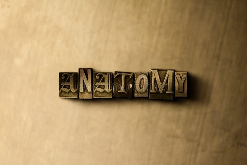 ANATOMIE - Nahaufnahme des grungy Weinlese gesetzten Wortes auf Metallhintergrund lizenzfreie stockfotografie