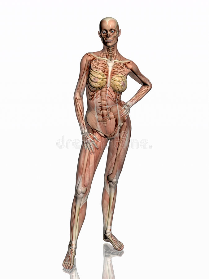Anatomie, transparant Muskeln mit dem Skelett. stock abbildung