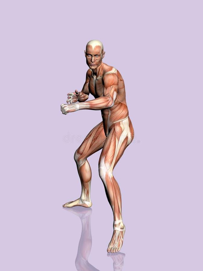 Anatomie van de man. vector illustratie