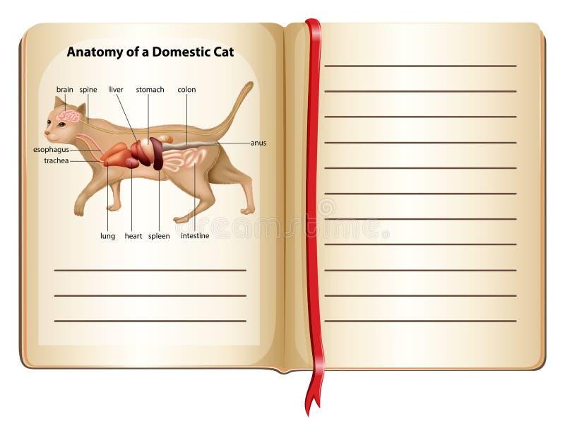 Anatomie van een binnenlandse kat stock illustratie