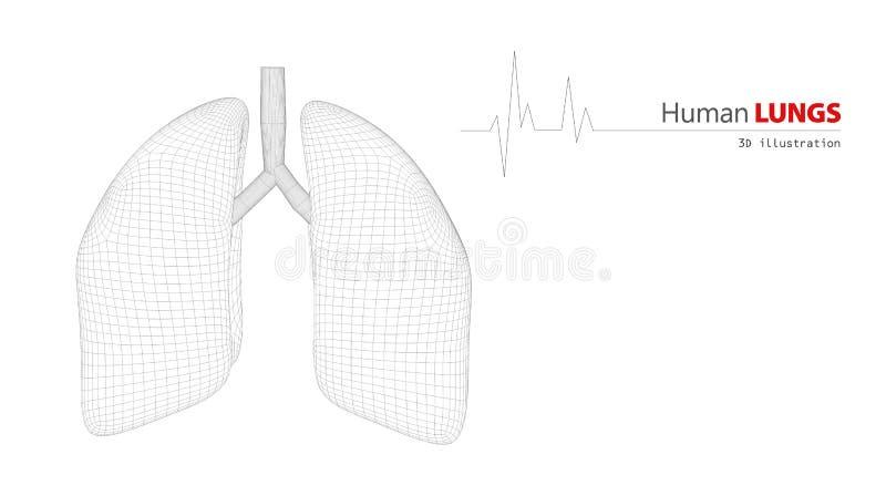 Anatomie von menschlichen Lungen lizenzfreie abbildung