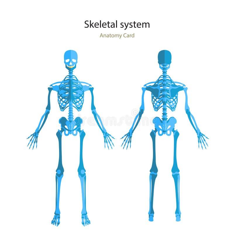 Großzügig Bild Des Menschlichen Skeletts Ideen - Anatomie und ...