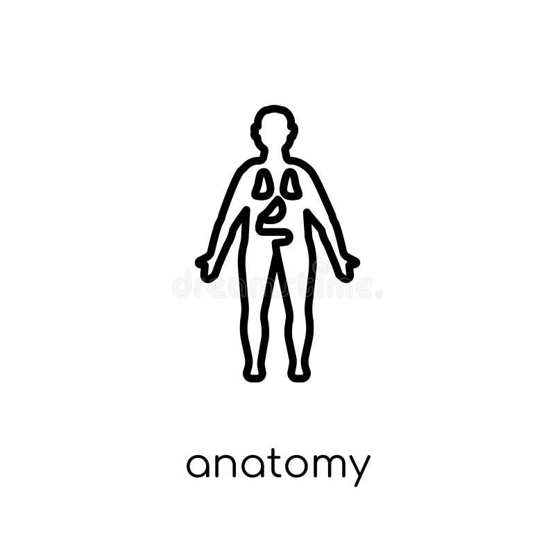 anatomiepictogram In modern vlak lineair vectoranatomiepictogram op w vector illustratie