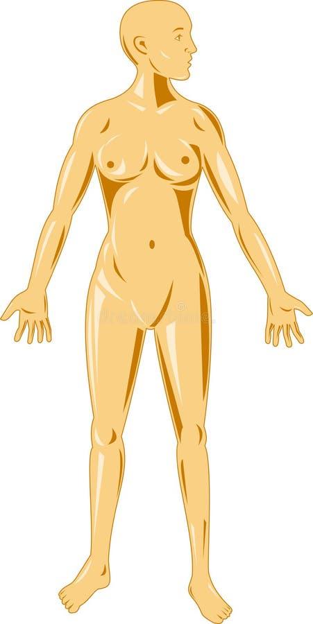 anatomii kobiety istota ludzka ilustracja wektor
