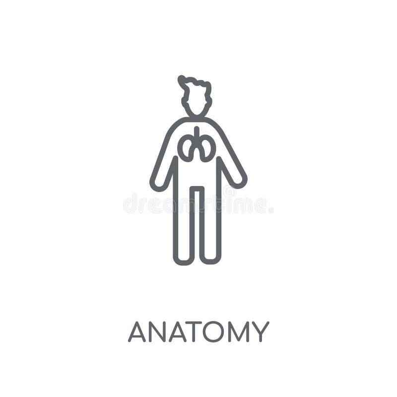 Anatomii liniowa ikona Nowożytny kontur anatomii logo pojęcie na whit ilustracji
