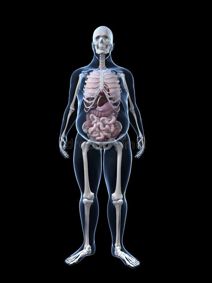 anatomii mężczyzna nadwaga royalty ilustracja