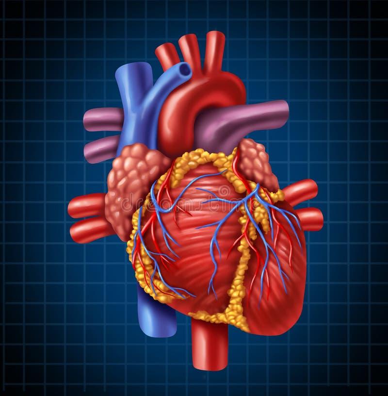 anatomii serca istota ludzka royalty ilustracja