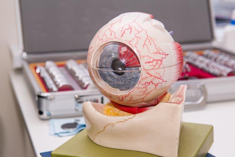 Anatomimodell för mänskligt öga på bakgrunden av uppsättningen av den korrigerande linsen Abstrakt bakgrund till oftalmologibegre arkivbilder