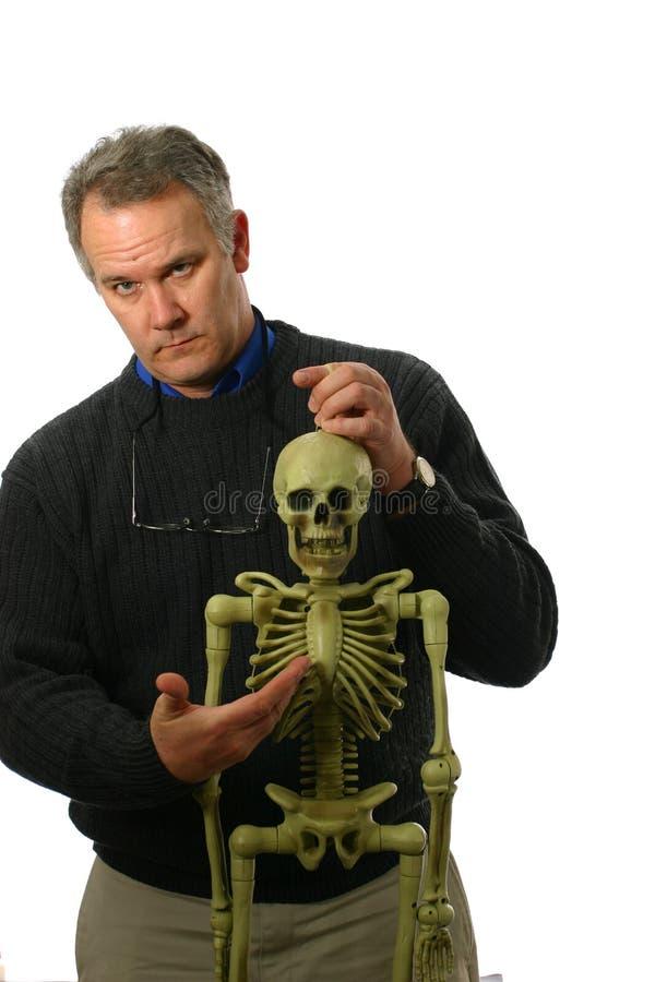anatomiprofessorskelett royaltyfria foton