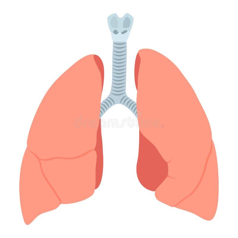 Anatomische longenillustratie stock illustratie
