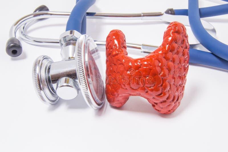 Anatomische vorm van de schildklier dichtbij de stethoscoop, die het onderzoekt De conceptenfoto voor examen of test, diagnose en stock fotografie