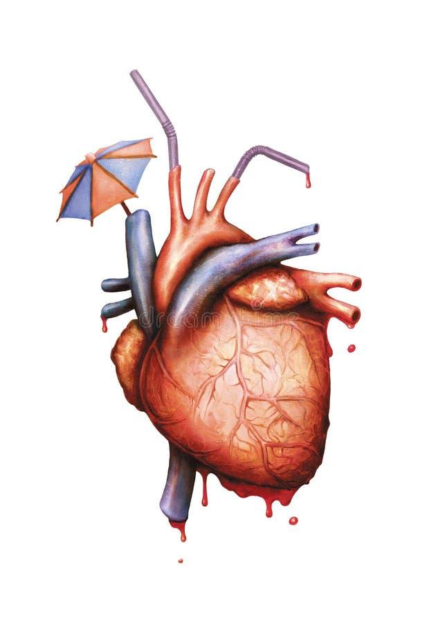 Anatomisk mänsklig bild för hjärtapartiillustration arkivbilder