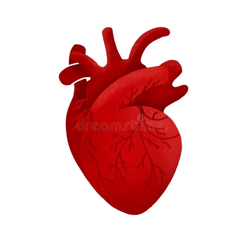 Anatomisk mänsklig hjärtatecknad filmdesign Medicinsk sund mallsymbol stock illustrationer